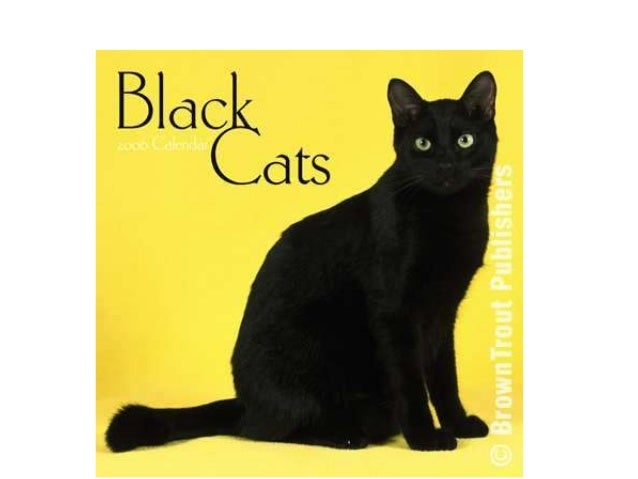 Black cats can be cuddly and cute…