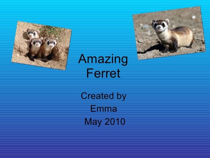 Amazing  Ferret  Created by  Emma  May 2010