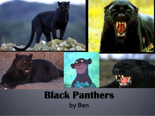 Page 3    PanthersPage 4    What Panthers DoPage 5    Panther's BehaviorsPage 6    Black Panther CubsPage 7    What They E...