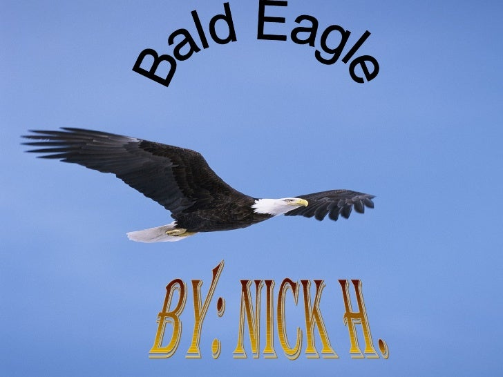 By: Nick H. Bald Eagle