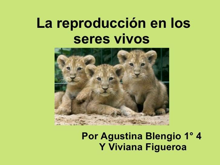 La reproducción en los seres vivos   Por Agustina Blengio 1 °  4  Y Viviana Figueroa