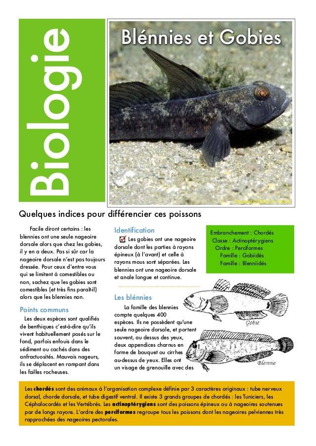 Les chordés sont des animaux à l'organisation complexe définie par 3 caractères originaux : tube nerveux dorsal, chorde do...