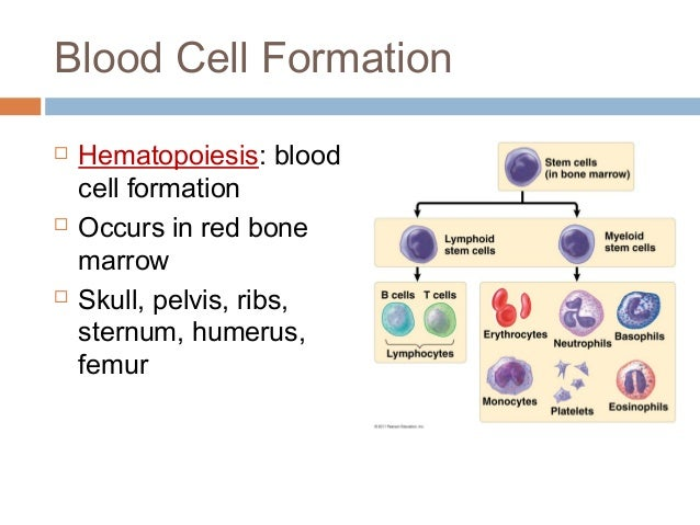 anatomy and physiology of blood Anatomy and physiology by rod r seeley 6th edition chapter 5 power-point arterial blood gas - arterial blood gas by mrs blood physiology is the.