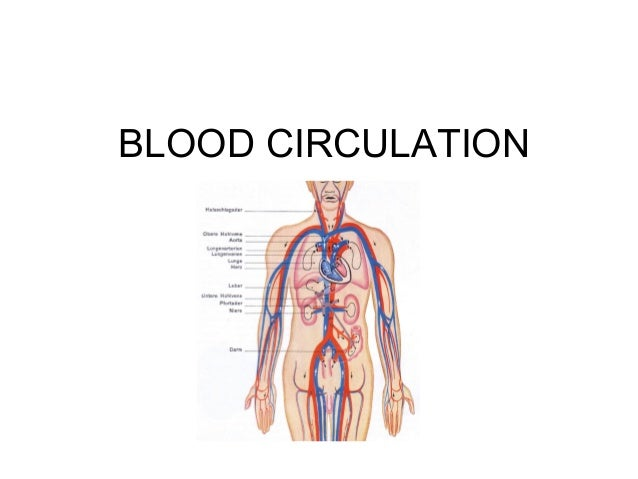 BLOOD CIRCULATION