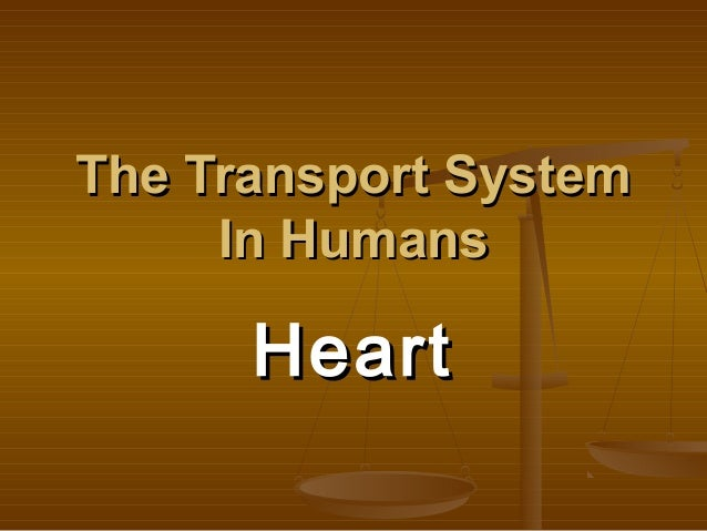 The Transport System     In Humans      Heart