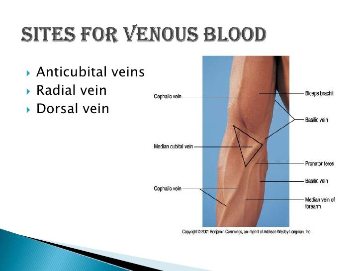 HENSO Non Heparinized Glass Capillary Tubes 60289271611 as well LabconCPette additionally Venipuncture also Collection And Handling Of Blood Final additionally 8889 111004 CR TUBE READER LANCER DIV. on capillary blood collection