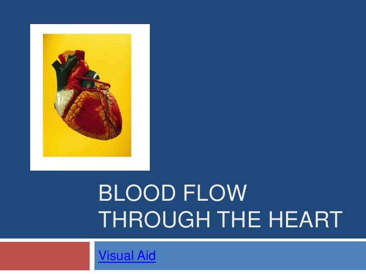Blood Flow through the Heart<br />Visual Aid<br />