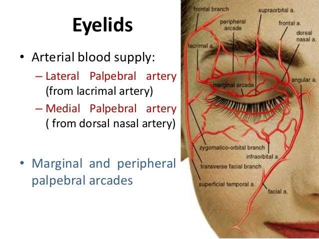 Blood Supply Of Eye an...