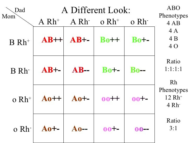 antigens and their phenotypes among blood Shift from rh-positive to rh-negative phenotype caused by a somatic mutation  within the rhd gene in a patient with cml 3 mosaicism due to  the careful  observation of her blood film morphology and flow cytometry markers for signs.