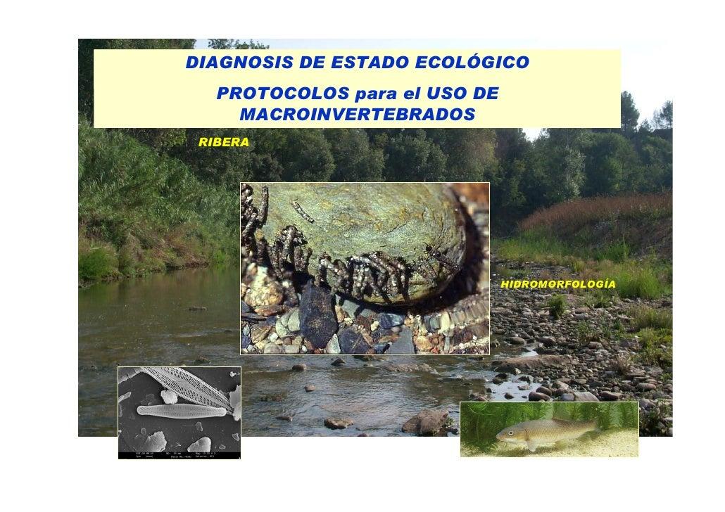 Bloque 3.  Macroinvertebrados 4 Protocols