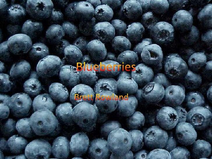 Blueberries<br />Brett Rowland<br />