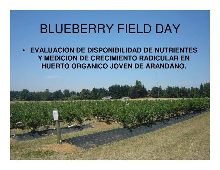 BLUEBERRY FIELD DAY • EVALUACION DE DISPONIBILIDAD DE NUTRIENTES     Y MEDICION DE CRECIMIENTO RADICULAR EN      HUERTO OR...