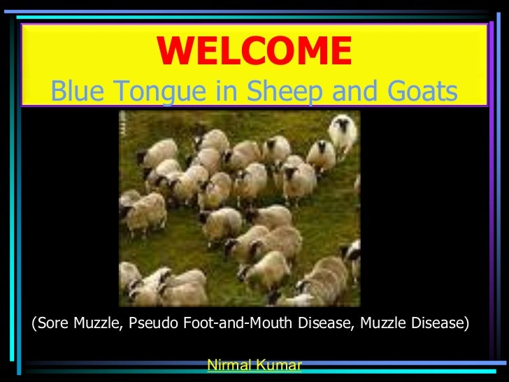 WELCOME  Blue Tongue in Sheep and Goats(Sore Muzzle, Pseudo Foot-and-Mouth Disease, Muzzle Disease)                       ...