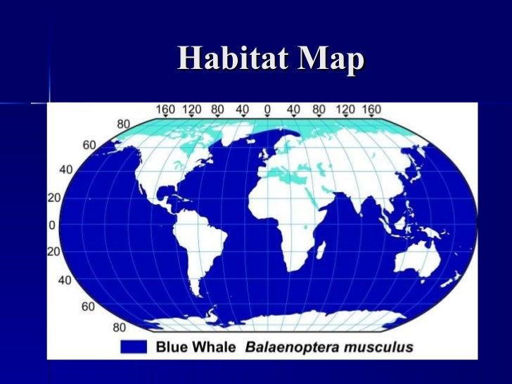 Blue whale habitat map - photo#1
