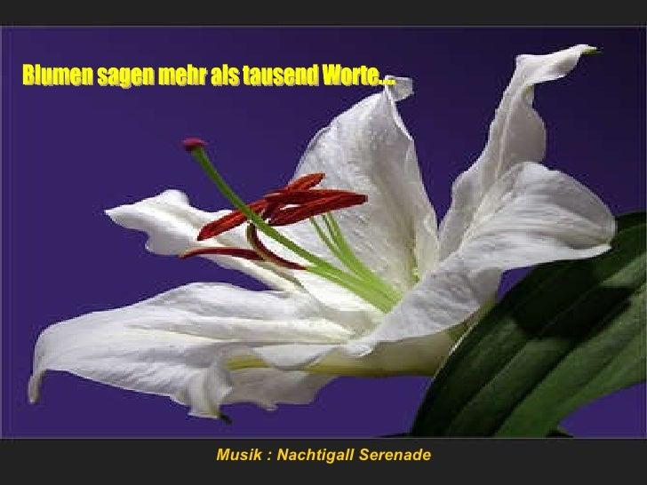 Blumen sagen mehr als tausend Worte.... Musik : Nachtigall Serenade