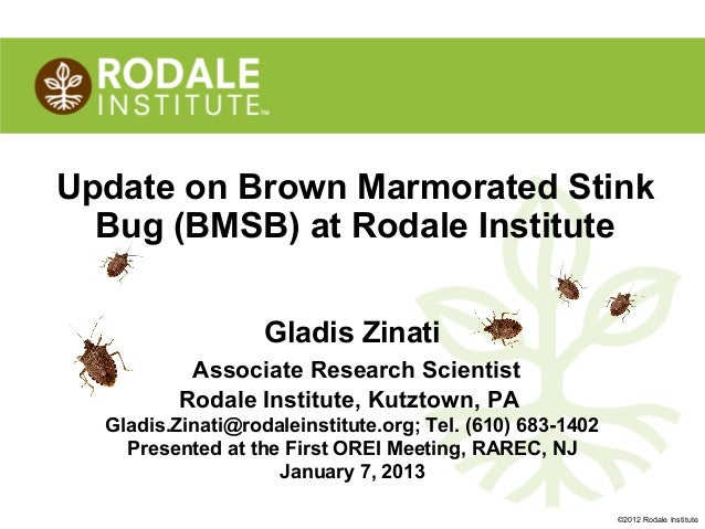 Update on Brown Marmorated Stink  Bug (BMSB) at Rodale Institute                   Gladis Zinati           Associate Resea...