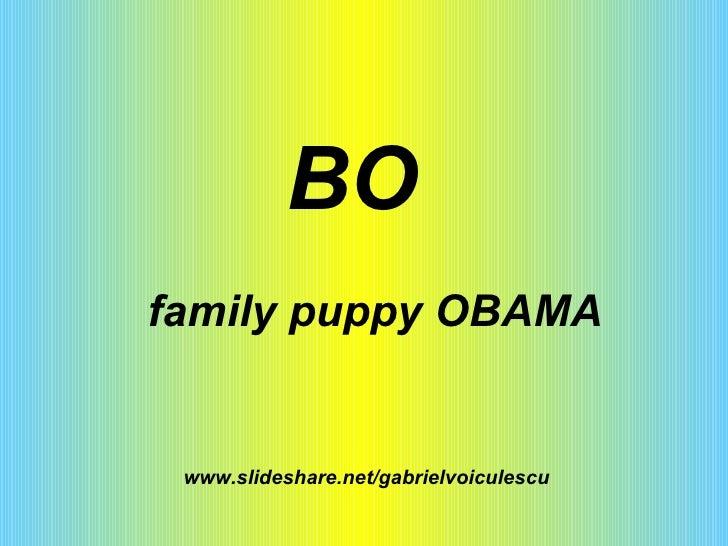 www.slideshare.net/gabrielvoiculescu BO family puppy OBAMA