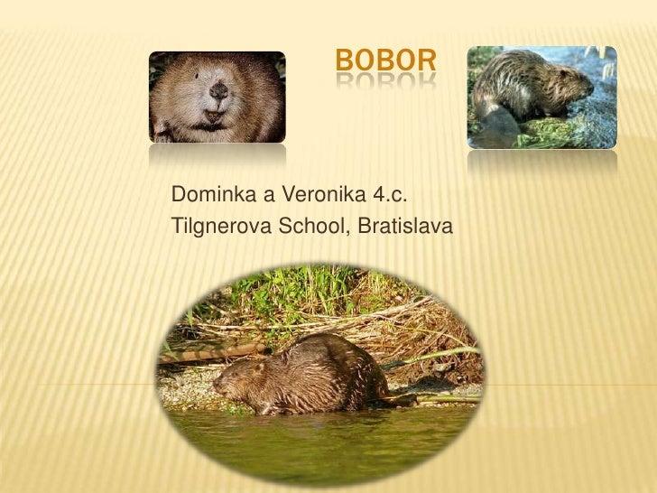 Bobor<br />Dominka a Veronika 4.c.<br />TilgnerovaSchool, Bratislava<br />
