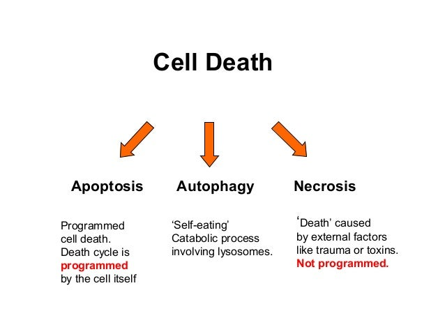 Image result for cell death