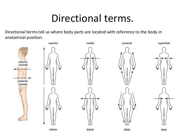body directions- regions