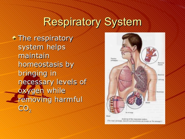 respiratory system research papers