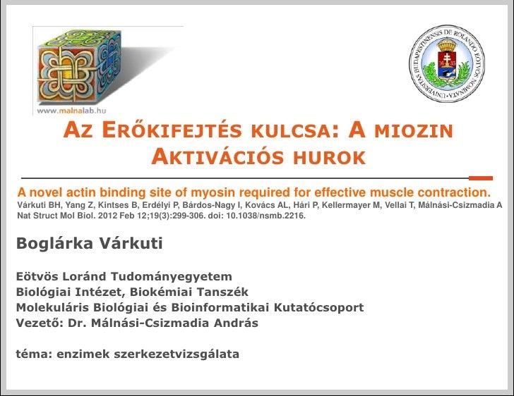 Várkuti Boglárka: Az erőkifejtés kulcsa: a miozin aktivációs húrok - Budapest Science Meetup Május