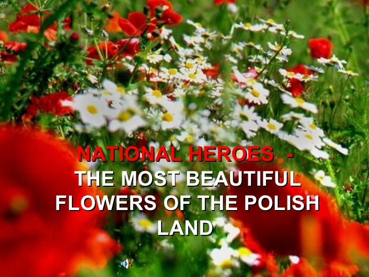 NATIONAL HEROES  -  THE MOST BEAUTIFUL FLOWERS OF THE POLISH LAND
