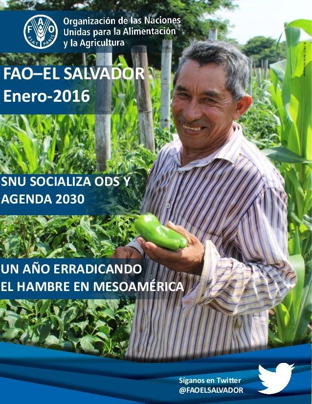 SNU SOCIALIZA ODS Y AGENDA 2030 FAO–EL SALVADOR Enero-2016 Síganos en Twitter @FAOELSALVADOR ©FAO/KarlaVelásquez UN AÑO ER...