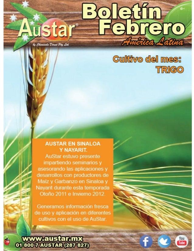 """El uso de AuStar """"Regulador deCrecimiento"""" Favorece a l a producción deClorofila, calidad d e Plántulas y r endimientopor ..."""