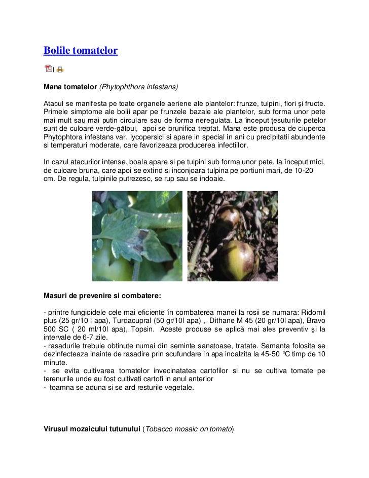 Bolile tomatelor   |Mana tomatelor (Phytophthora infestans)Atacul se manifesta pe toate organele aeriene ale plantelor: fr...