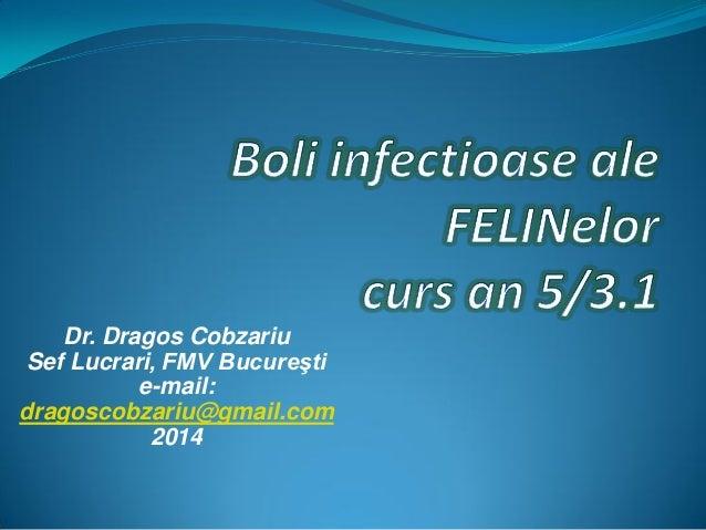 FeLV si FIV Boli pisici an 5 curs Diagnostic si Profilaxie