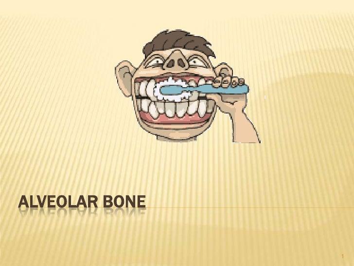 Alveolar bone<br />1<br />