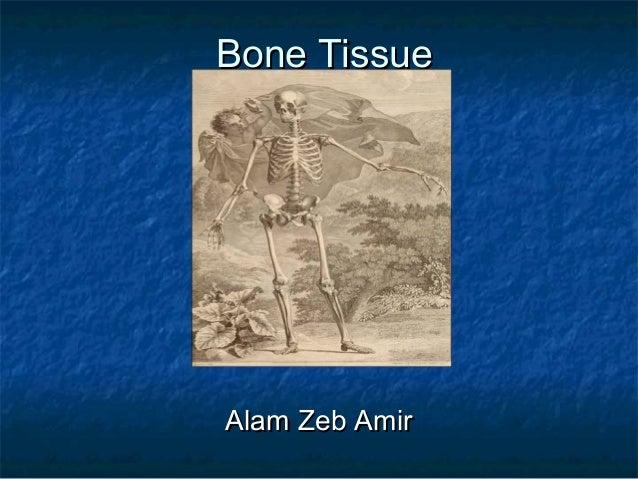 Bone TissueBone Tissue Alam Zeb AmirAlam Zeb Amir