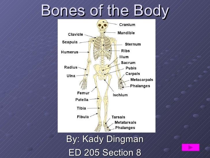 Bones of the Body By: Kady Dingman ED 205 Section 8