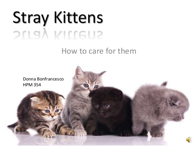 Stray Kittens                 How to care for them Donna Bonfrancesco HPM 354