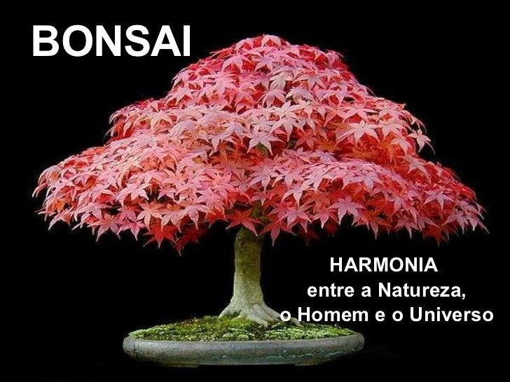 BONSAI HARMONIA  entre a Natureza, o Homem e o Universo