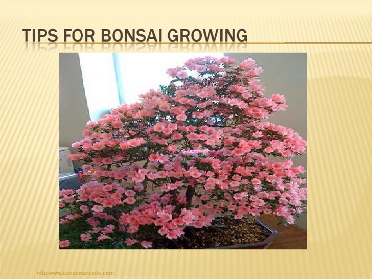 http:www.bonsaicareinfo.com