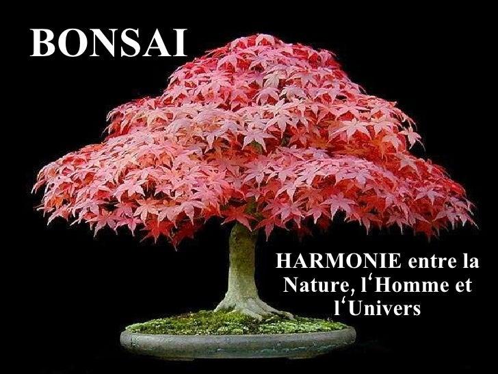 BONSAI HARMONIE entre la Nature, l'Homme et l'Univers