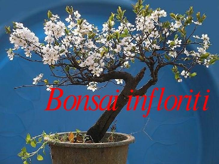 Bonsai infloriti