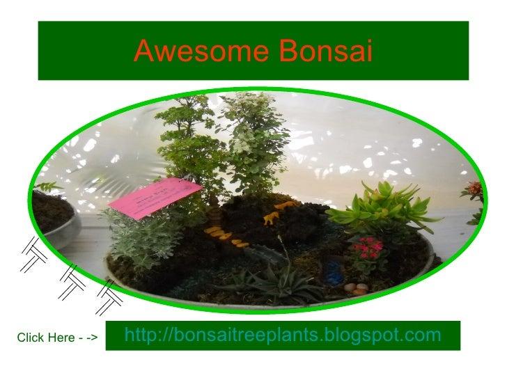 Bonsai tree | Growing Bonsai Plants | Technique | Training | Book