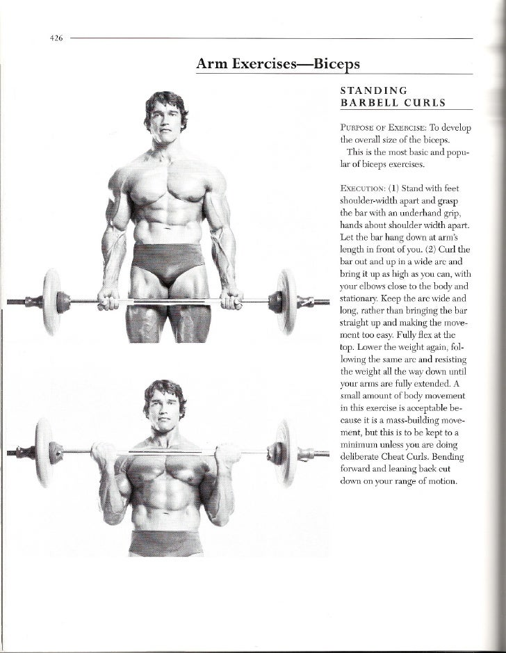 426         Arm Exercises-Bice.es                               STANDING                               BARBELL CURLS      ...