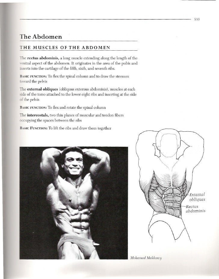 533     The Abdomen THE MUSCLES               OF THE ABDOMEN  The rectus abdominis, a long muscle extending along the leng...