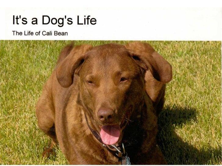 The Life of Cali Bean