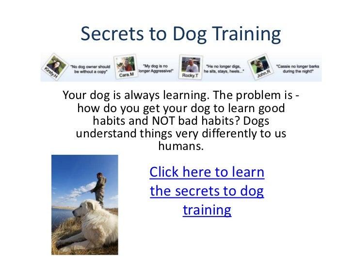 Books about dog training