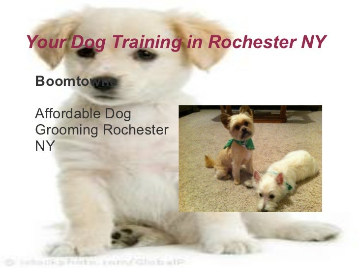 Forceful Dog Training