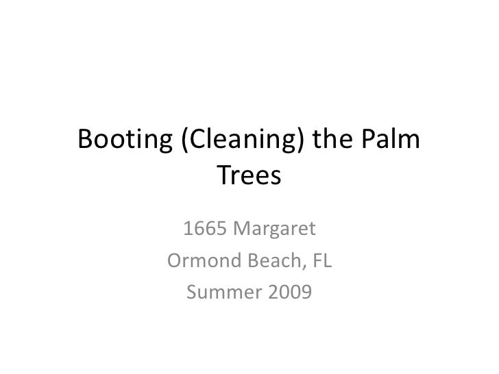 Booting (Cleaning) the Palm Trees<br />1665 Margaret<br />Ormond Beach, FL<br />Summer 2009<br />
