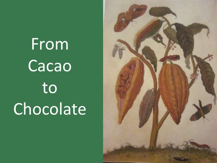 From  Cacao    toChocolate