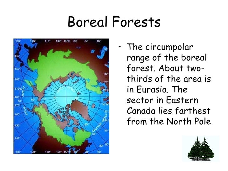 Boreal Forests <ul><li>The circumpolar range of the boreal forest. About two-thirds of the area is in Eurasia. The sector ...