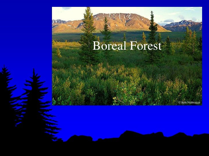 Boreal Forest<br />