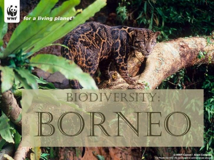 Biodiversity: Borneo